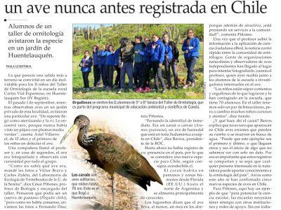 Niños de Huentelauquén Sur registran nueva especie de ave para Chile